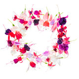 Fuchsia flower wreath with place for your text or image is isola Stock Image