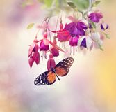 Fuchsia Flowers and butterfly. Red and Purple Fuchsia Flowers and butterfly Stock Images