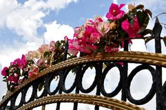 Fuchsia flowers on fence Royalty Free Stock Photography