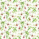 Fuchsia flowers. Seamless floral pattern. Watercolor Stock Photos