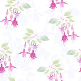 Fuchsia flowers seamless floral pattern on white background Stock Photography