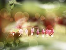 Fuchsia i blom, selektiv fokus Hipsterfilter arkivbild
