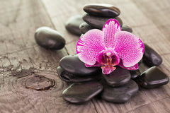 Fuchsia Moth Orchid and black stones on weathered deck Royalty Free Stock Photography