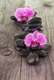 Fuchsia Moth Orchids and black stones on weathered deck Stock Photo