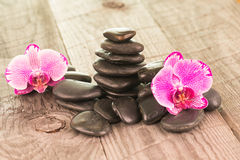 Fuchsia Moth Orchids and black stones on weathered deck Royalty Free Stock Photos