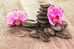 Fuchsia Moth Orchids and black stones on weathered deck Stock Photography