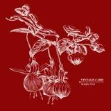 Fuchsia peint à la main - carte de vintage Photo stock