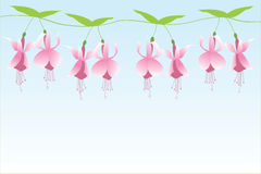 Fuchsia row Stock Photo