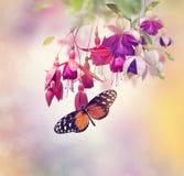 Fuchsiakleurig bloemen en vlinder Stock Afbeeldingen