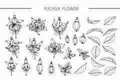 Fuchsian blommar teckningen och skissar med linje-konst Royaltyfria Foton