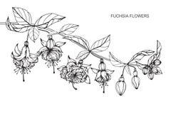 Fuchsian blommar teckningen och skissar med linje-konst Fotografering för Bildbyråer