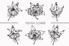 Fuchsian blommar teckningen och skissar med linje-konst på vit backgr Royaltyfria Bilder