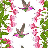 Fuchsien-und Kolibri-nahtloses Muster Stockbilder