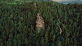 Fucilazione della natura delle rocce degli abeti dal quadrocopter video d archivio