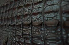 Fucilazione della pelle del coccodrillo macro Fotografia Stock