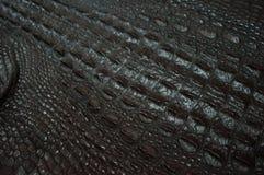 Fucilazione della pelle del coccodrillo macro Fotografie Stock Libere da Diritti