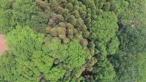 Fuco aereo sparato sopra la foresta archivi video