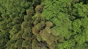 Fuco aereo sparato sopra la foresta stock footage