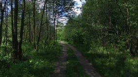 Fuco che sorvola gli alberi nel sentiero forestale video d archivio