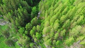 Fuco che sorvola una foresta verde con la cascata nelle montagne di Altai stock footage
