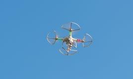 Fuco di volo Fotografia Stock