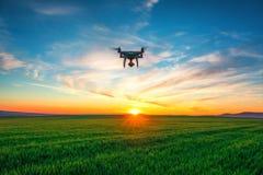 Fuco di volo e giacimento di grano verde Fotografia Stock Libera da Diritti