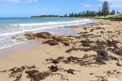 Fuco ed alga su una spiaggia a bassa marea Immagine Stock