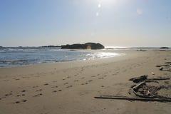 Fuco rivolto a Nord del sud dell'oceano Pacifico della spiaggia Fotografie Stock Libere da Diritti