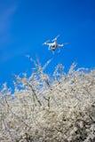 Fuco sopra l'albero di fioritura immagini stock libere da diritti