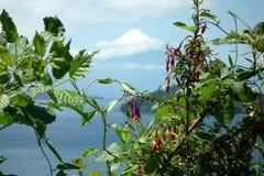Fucsias salvajes y el volcán fotos de archivo
