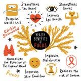 Fucus, algue comestible, prestations-maladie Affiche infographic tirée par la main drôle Illustration de dessin animé illustration de vecteur