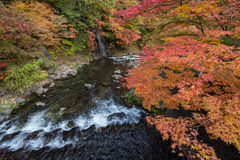 Fudostroom in de herfstseizoen bij Nakano-momijiberg Stock Afbeeldingen