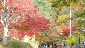 Fudostroom en de rode brug bij Onderstel nakano-Momiji, Kuroishi-stad, Aomori-prefectuur, Tohoku-gebied, Japan stock video