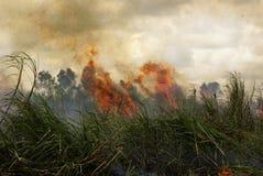 Fuego Fotografía de archivo