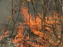 Fuego. Foto de archivo