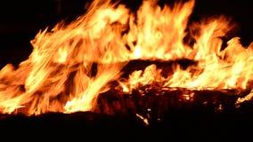 Fuego ardiente en bosque oscuro almacen de video