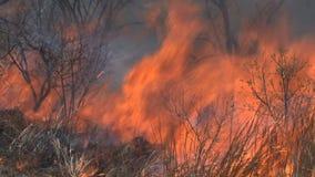 Fuego bajo que quema en la sabana almacen de metraje de vídeo