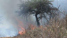 Fuego bajo que quema en la sabana metrajes