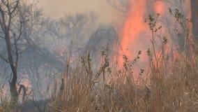 Fuego bajo que quema en la sabana almacen de video