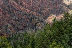 Fuego Colorado Springs del barranco de Waldo imagen de archivo libre de regalías