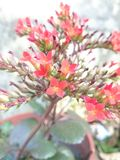 Fuego-como la flor Imagenes de archivo
