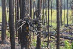Fuego 1141 de Bush Fotografía de archivo