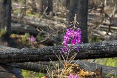 Fuego 1134 de Bush Imagen de archivo libre de regalías