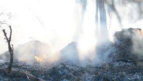 Fuego de la basura del bosque metrajes
