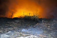 Fuego de la caña de azúcar Imagen de archivo libre de regalías
