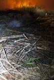 Fuego de la caña de azúcar Fotografía de archivo