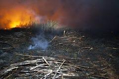 Fuego de la caña de azúcar Fotos de archivo