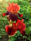 Fuego de la fragua de la variedad del iris fotos de archivo libres de regalías