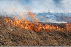Fuego de la hierba Fotos de archivo libres de regalías