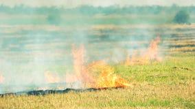 Fuego de la hierba del campo y movimiento del humo almacen de metraje de vídeo